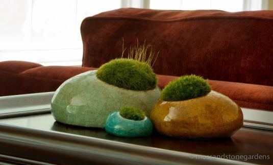 must have no fuss moss indoors growing optimism. Black Bedroom Furniture Sets. Home Design Ideas